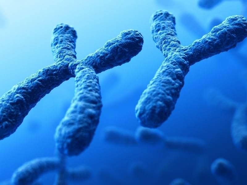 Imagem ilustrativa de cromossomos.
