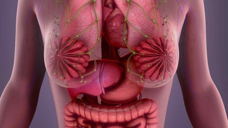 Como diferenciar glândulas mamarias de nódulos?